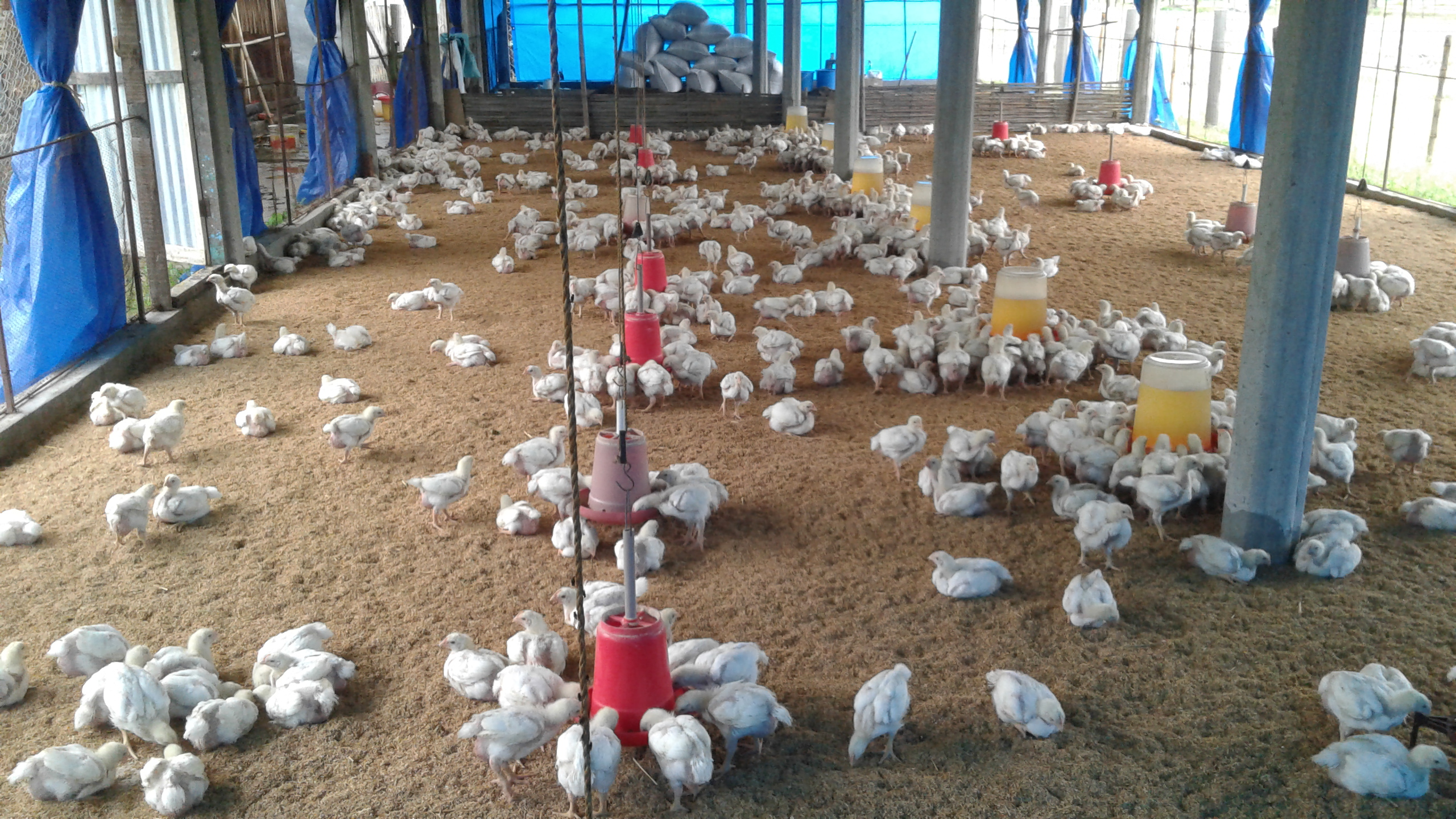 poultry farming business plan philippines office